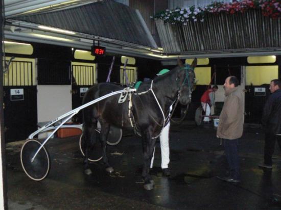 Dîner spectacle à l'hippodrome de Vincennes (7)
