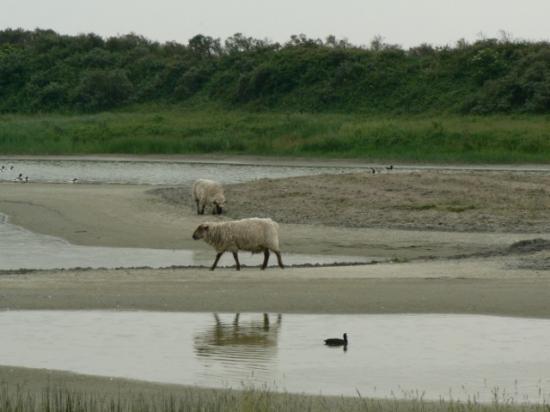 Sortie en baie de Somme (25)